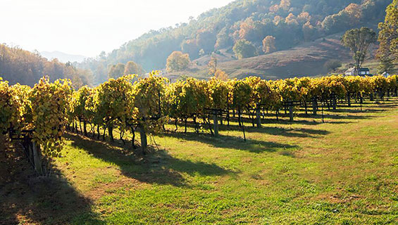 Vineyard Sytage at Graves Mountain Music Festival - nearby DuCard Vineyard