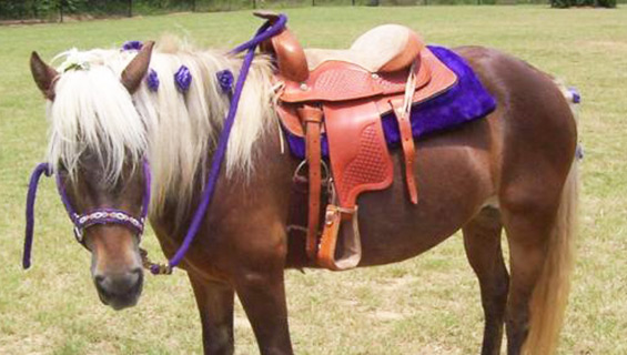Pony Rides by KIds Tent at Graves Mountain Music Festival